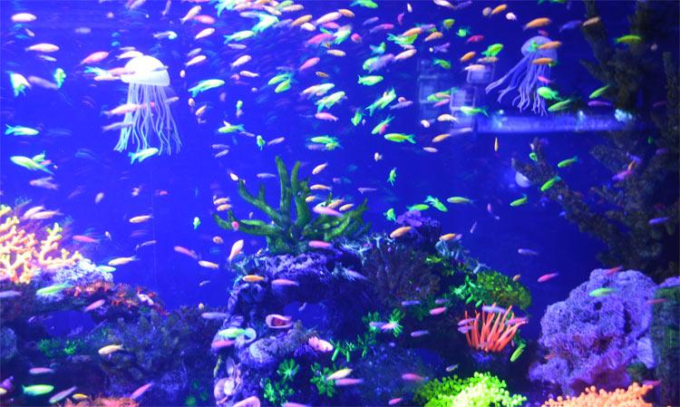 Жителі Індійського океану. Життя в океані, риби та водорості