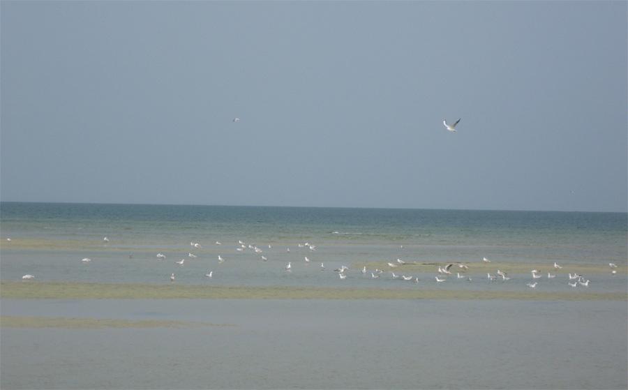 Азовське море природа Азовського моря чайки птахи фауна ранкова погода пляжі мілководдя глибина літо сезон як виглядає курорти та санаторії як азовське море використовується людиною які річки впадають в азовське море опис