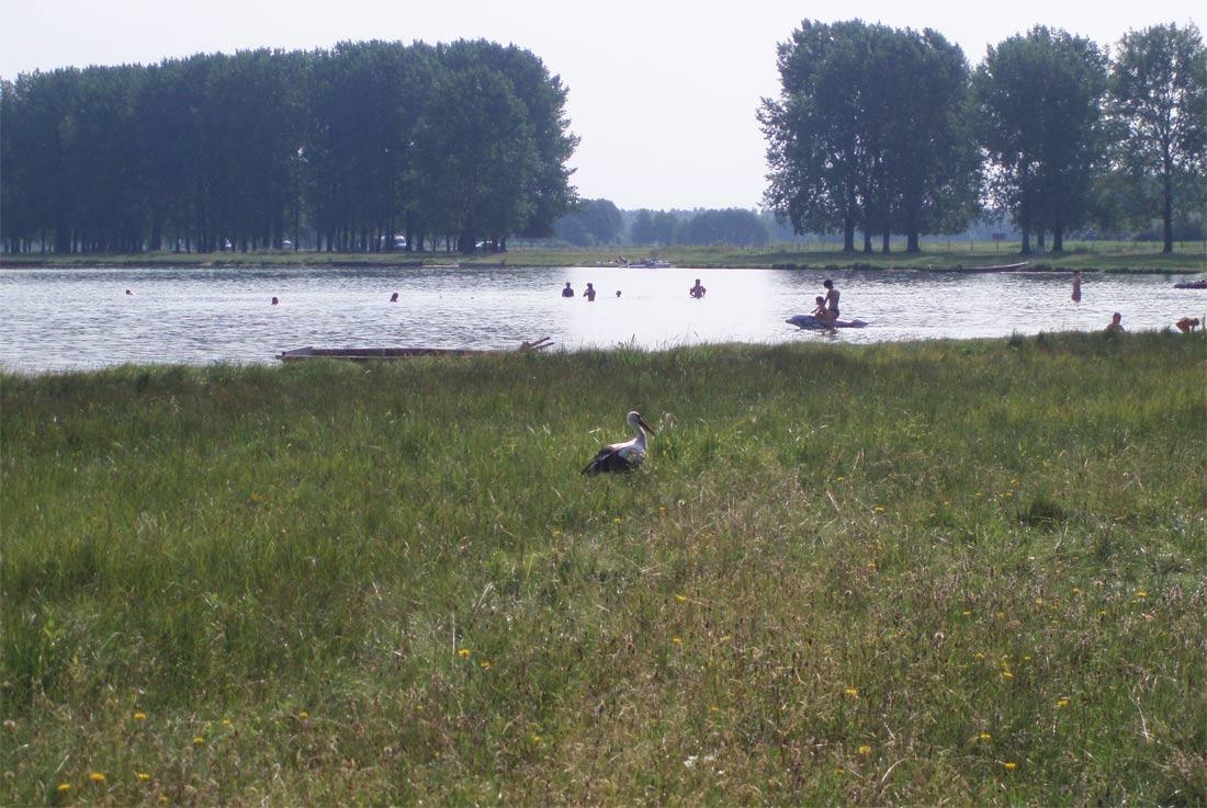 озеро Світязь довжина ширина площа середня глибина біля берега природа тварини птахи рослинний світ флора фауна географічна характеристика опис Світязя