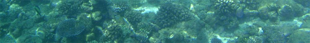 Властивості вод Світового океану, солоність, температура води в Світовому океані відпочинок, туризм, географія урок