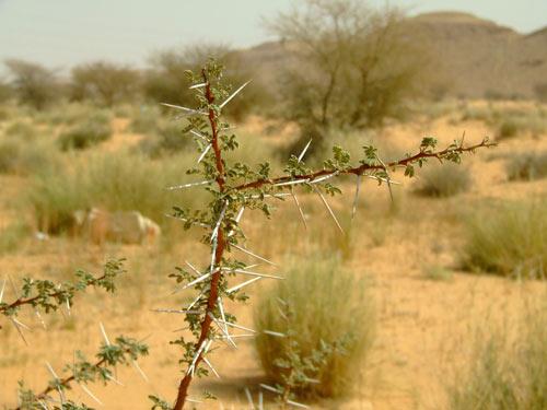 Трави полин та солелюбні рослини